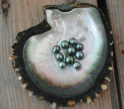perlas de tahití