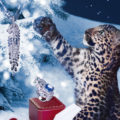 Winter Tale by Cartier