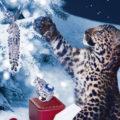 Winter Tale by Cartier