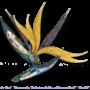 Bird of Paradise, un broche de Nicholas Varney Jewels