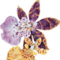 El increíble Broche Orquídea de Tiffany & Co.